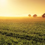 Marland Law is a specialist Advisory and Agribusiness Law Firm servicing clients throughout Queensland and rural Australia.